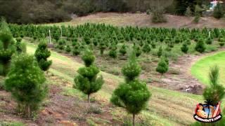 Kula Botanical