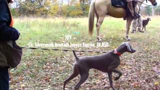 2011 Chattahoochee Weim Club Walking Field Trial/hunt Test