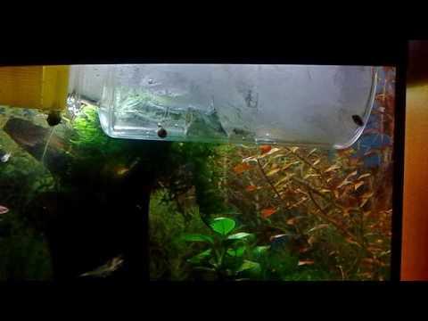 Как охладить воду в аквариуме в жару понижаем температуру в аквариуме