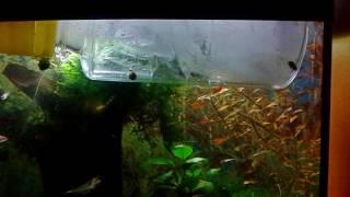видео Как понизить температуру воды в аквариуме – способы охлаждения аквариума