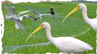 Catch the western birds