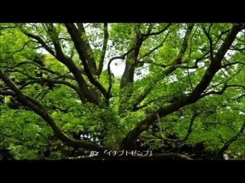 Bz(ビーズ)/稲葉浩志 メドレー 作業用BGM