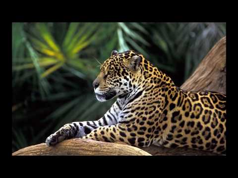 Amazon Rainforest Nature Sounds For Relaxation and Stress Relief