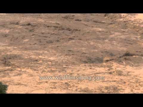 Muddy water in Sangam, Dev Prayag : Post Uttarakhand Flood
