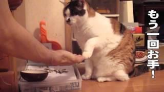 猫も教えたら芸するんですよ? 言葉も200くらいは知ってますし。 次回は...