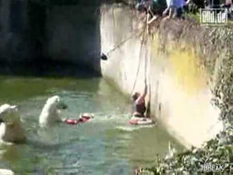 kenhvideo.com - Kinh hoàng gấu bắc cực tấn công phụ nữ tại vườn thú