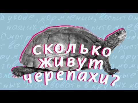 Сколько живут домашние черепахи?