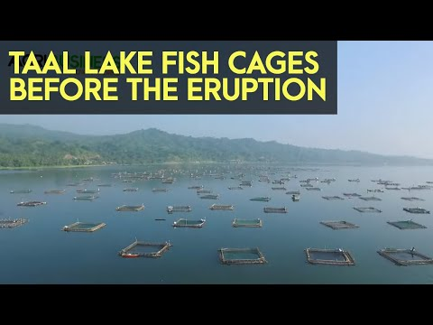 TAAL LAKE Thousands Of Tilapia Fish Cages Aerial View   Agribusiness How It Works