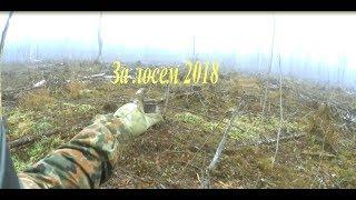 "ОХОТА НА ЛОСЯ 2018 Hunting elk bull."" 2018"