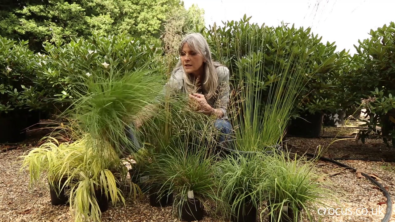 The Best Ornamental Grasses For Shade Youtube