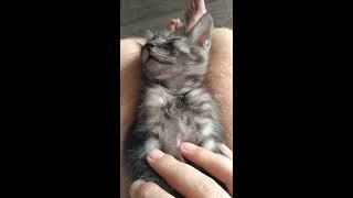 Приколы с котами. Смешные коты.   Домашние питомцы. Детский канал.