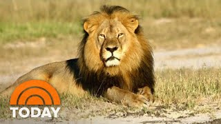 Cecil The Lion's Death: What Really Happened Is Revealed In New Book