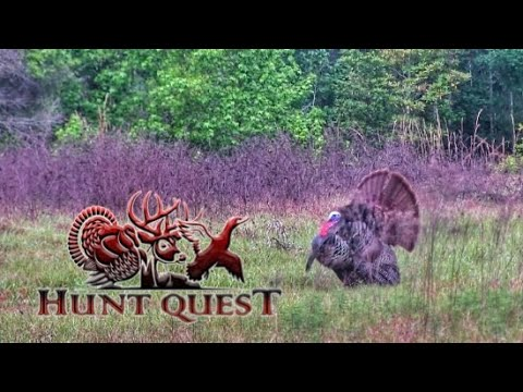Hunt Quest S4 E7 Public Land Osceola!