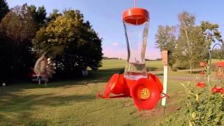 Humingbirds of Havre De Grace