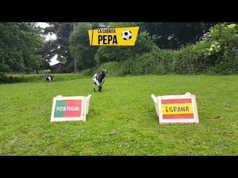 La cabra Pepa se adelanta y da a España como ganadora ante Portugal