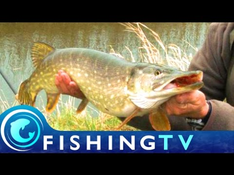 Fishing For Fenland Pike - Fishing TV
