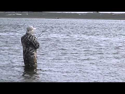 Silver Salmon (Coho) Fly Fishing on Alaska Tsiu River with Guide Chad Pettrone
