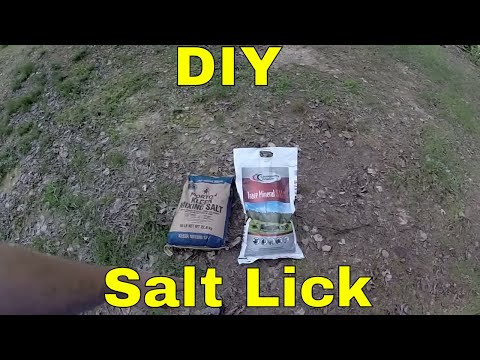 How To Make a Salt/ Mineral Lick for Deer and other Wildlife