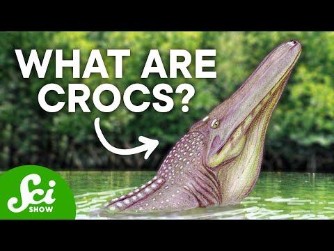 5 Of The Strangest Prehistoric Crocs
