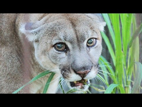 Catching Up With The New Big Cats