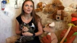 «У моей кошки редкая порода - Царская помоечная»
