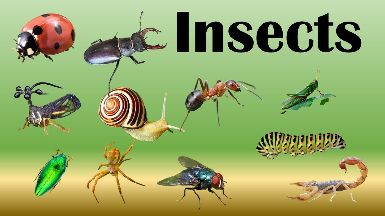 Different types of insects |Learn insects name |Insects ...