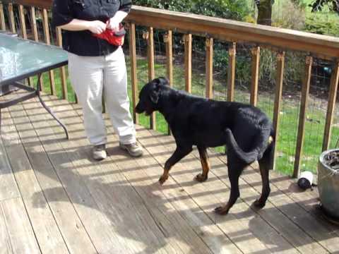 Truffle Dog Training  - www.NWTruffleDogs.com