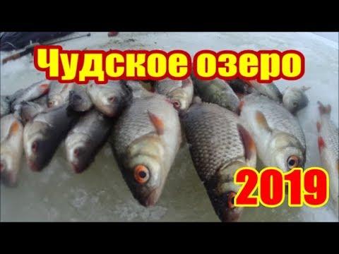 Чудское озеро 2019