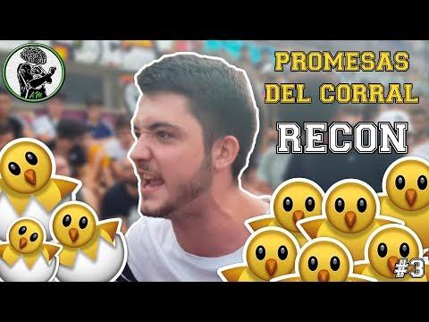 Promesas Del Corral #3 I RECON 🐣