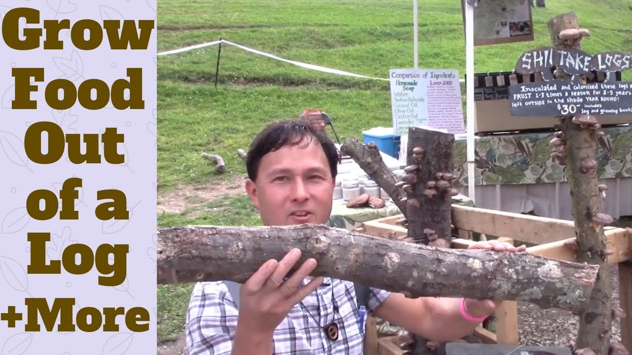 grow food out of a log and more from mother earth news fair youtube