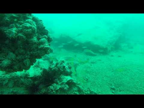 First Time Diving - Sir Bani Yas