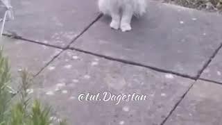 Смешной кот с большими глазами