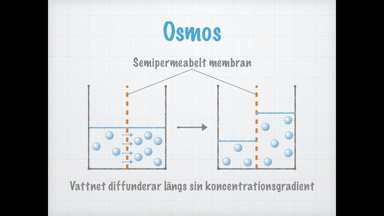 osmos i kroppen