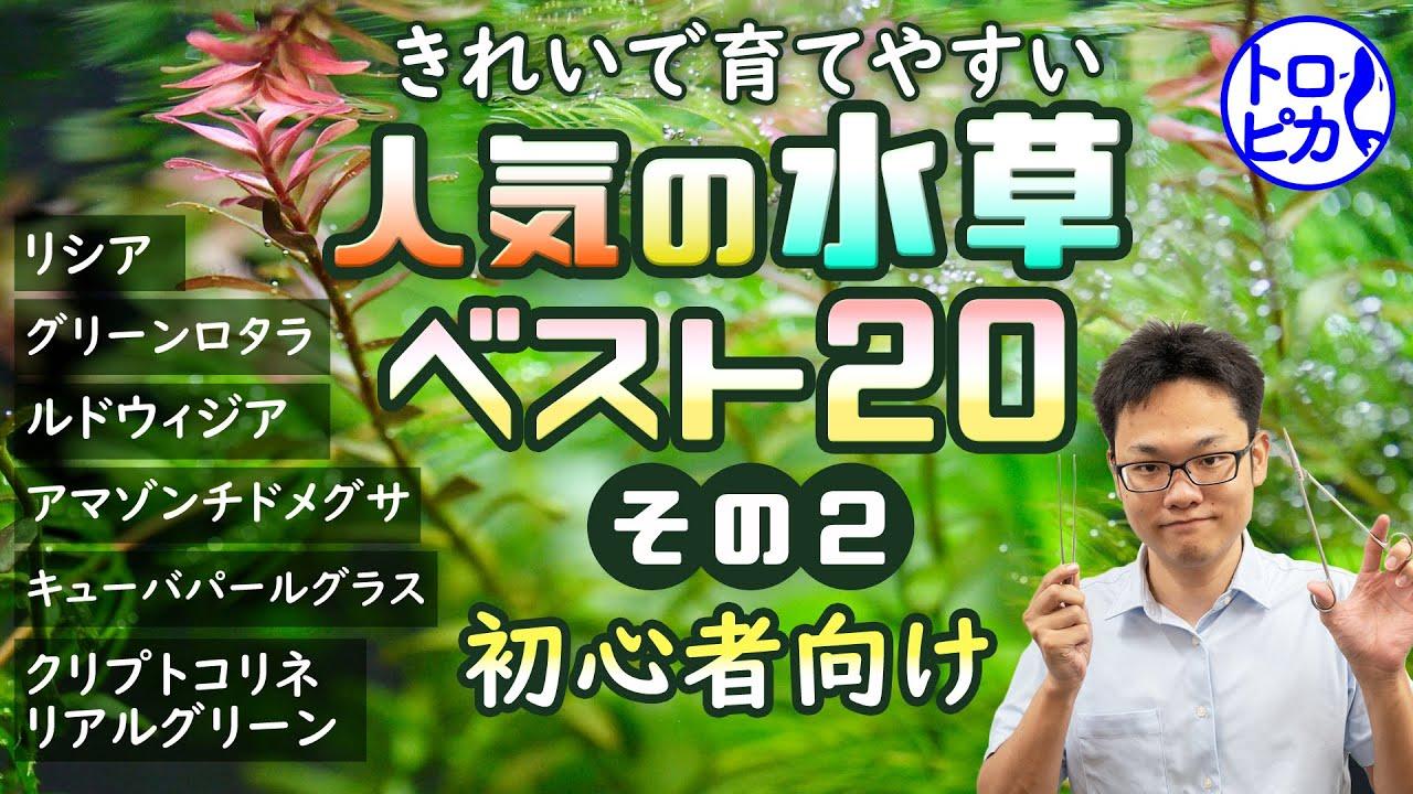 【初心者向け】きれいで育てやすいおすすめ人気の水草ベスト20!その②