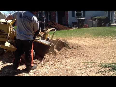 Smith Tree Service Grinding Away