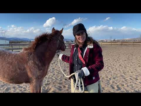 A Day in the Life at Colorado Horse Rescue