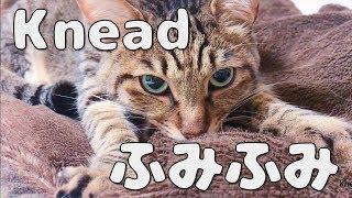 猫の琥太郎4歳が、 子供の頃を思い出してふみふみしている動画です。 ...