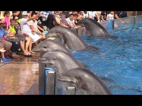 Thumbnail: Dolphin Days (Full Show) at SeaWorld San Diego on 8/30/15