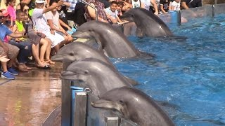Dolphin Days (Full Show) at SeaWorld San Diego on 8/30/15