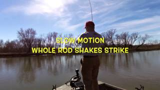 slow motion crappie strike entire rod shakes strike