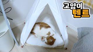 요즘 유행중인 캠핑 고양이도 텐트를 좋아할까?
