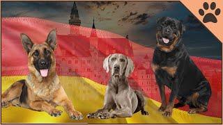 Top 10 German Dog Breeds