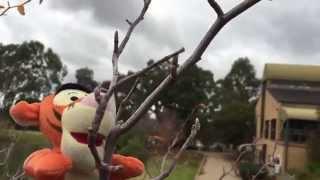 The Climbing Tigger | Tigger's Adventures! S01 E02