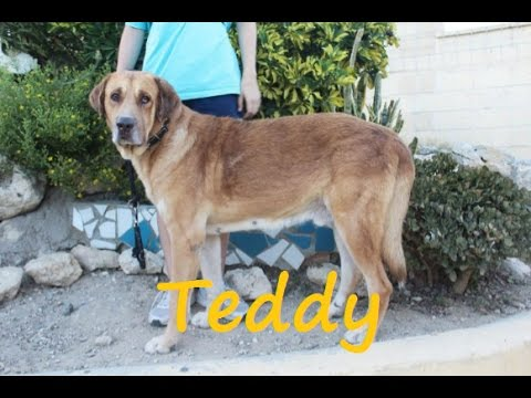 Teddy protectora de animales m laga youtube for Protectora de animales malaga ciudad jardin