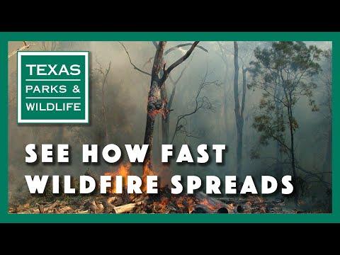 איך שריפה מתפשטת