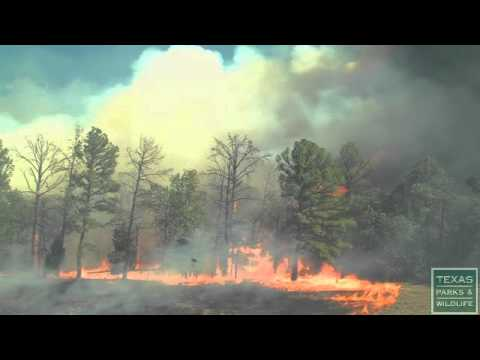 See How Fast Wildfire Spreads - Texas Parks And Wildlife [Official]
