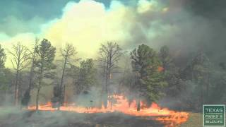 Popular Videos - Wildfire & Nature