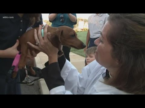 Episcopal School of Knoxville offers pet blessing for all types of animals