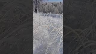 нереально красиво . природа .зима . снег. иней .