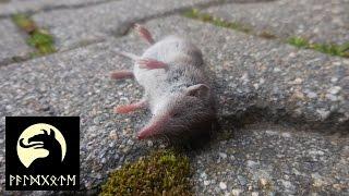 Naturbewusstsein: dem Tod geweihte Tiere erlösen?
